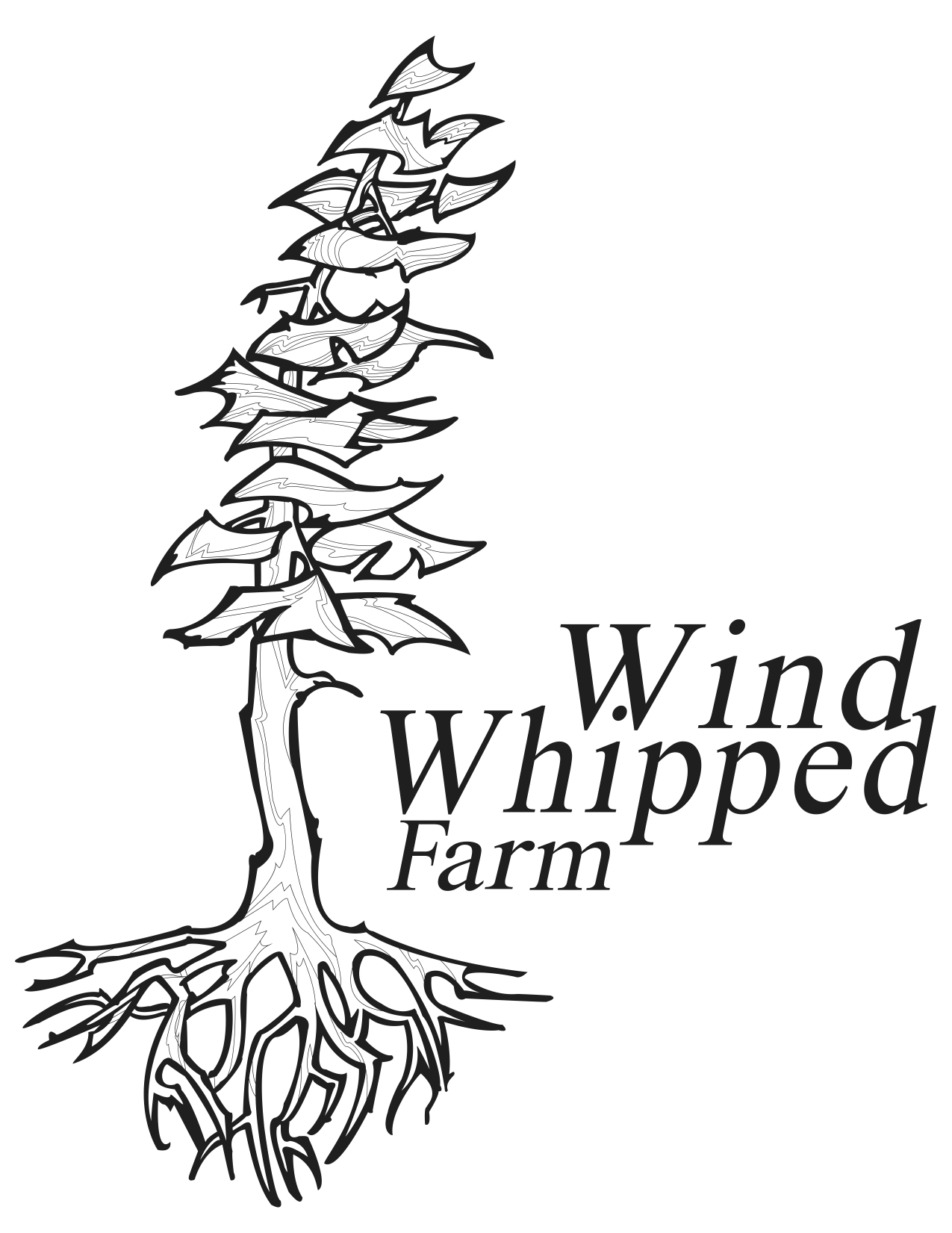 Wind Whipped_FINAL